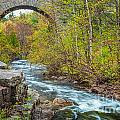 Duck Brook Bridge In Acadia by Susan Cole Kelly