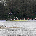 Duck Chasing The Boat Race by Tim  Senior