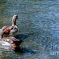 Duck Duck by Rich Priest