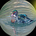 Duck In A Bubble  by Jeff Swan