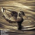 Duck In Grey Shades V A by Gert J Rheeders