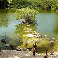 Duck Island by Amar Sheow
