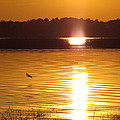 Duck On Sunset by Zina Stromberg