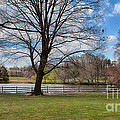Duck Pond Haverford College by Kay Pickens