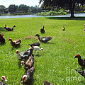Duck Season by Jennifer Lavigne