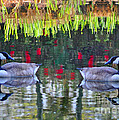 Duckland Pond Reflections by Lydia Holly