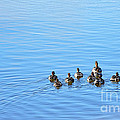Ducklings Day Out by Kaye Menner