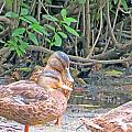 Ducklings Emancipated by Kathy Johnson