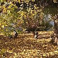 Ducklings In Sunshine by Bessie Frei