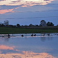 Ducks And Geese At Sunset by Susan Wyman