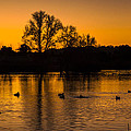 Ducks At Sunrise On Golden Lake Nature Fine Photography Print  by Jerry Cowart