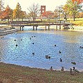 Ducks At The Park Pond by Donna Wilson