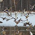 Ducks Away by Lynne Shields