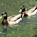 Ducks by Bob Slitzan