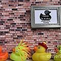 Ducks In A Row by Chrystyne Novack