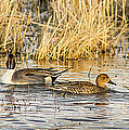 Ducks In A Row by Jean Noren