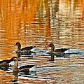 Ducks In The Fall by Lynn Hopwood