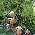 Ducks by JQ Licensing