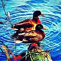 Ducks On A Log by Tara Potts