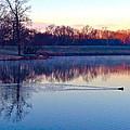 Duck's Sunrise by Lexi Heft