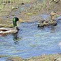 Ducks Unlimited by Bonfire Photography