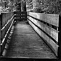 Dukes Creek Falls Walkway by Tara Potts