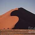 Dune 45 Morning by Liz Leyden