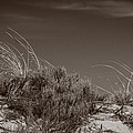 Dune And Blue Sky by David Stone