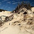 Dune Glue by Adam Jewell