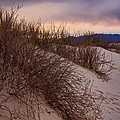 Dune Grass by Diana Powell