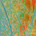 Dune Grass by Diane DiMarco