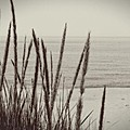 Dune Grass In Early Spring by Michelle Calkins