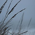 Dune Grass On A Foggy Day by Robert Banach