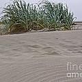Dune Grass On Beach Dune Landscape Art Prints by Valerie Garner