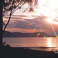 Dunk Island Australia by Jerome Stumphauzer