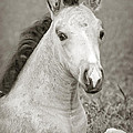 Dunn Filly by Donna Cloutier
