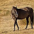 Durango by Jack Milchanowski
