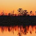 Dusk At Pocosin Lakes by April Copeland