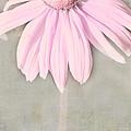 Dusky Pink Coneflower by Bonnie Bruno