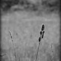 Dust In The Wind by Rhonda Barrett