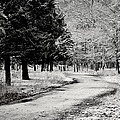 Dusted Path - Black And White by Terry DeLuco
