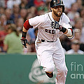 Dustin Pedroia by Marvin Blaine