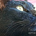 Dusty Black Cat by Kerri Mortenson