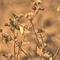 Dusty Desert  by Paula Sharlea