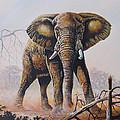 Dusty Jumbo by Anthony Mwangi