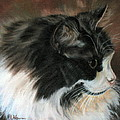 Dusty Our Handsome Norwegian Forest Kitty by LaVonne Hand