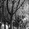 Dutch City Trees - Black And White by Carol Groenen