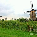 Dutch Landscape With Windmills by Carol Groenen