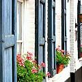 Dutch Window Boxes by Carol Groenen