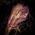 Dying Night Flower  by Kathleen Messmer